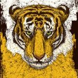 Tiger Head Immagine Stock