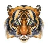 Tiger Head Images libres de droits