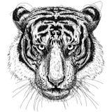 Tiger Head Image libre de droits