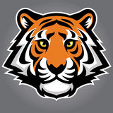 Tiger Head Illustration Stock