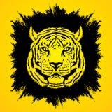 Tiger Head Photos libres de droits