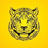 Tiger Head Photos stock
