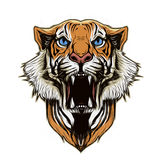 Tiger head on abstract background Stock Image