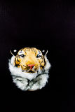 Tiger head bag isolated. White background Stock Photos