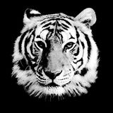Tiger Head. Black and White Tiger Head Stock Photography