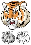 Tiger head close up. Tiger growling, close-up, vector illustration Stock Images