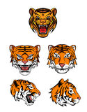Tiger Head Collection Royaltyfri Foto