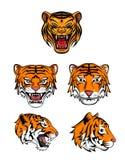 Tiger Head Collection Foto de archivo libre de regalías