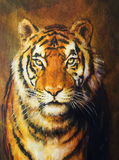 Tiger head, color oil painting on canvas. Stock Images