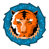 Tiger head. Design vector illustration. Tiger head. Design color vector illustration Stock Images