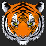 Tiger Head Drawing. Hand drawn tiger head front view Royalty Free Stock Images