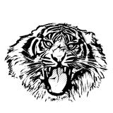 Tiger Head Graphic Images stock