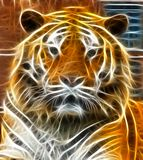 Tiger head illustration Royalty Free Stock Image
