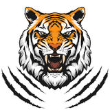 Tiger head illustration. In vector on white background Royalty Free Stock Images