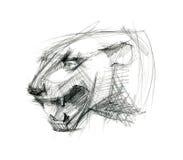 Tiger head. Ink sketch. Stock Photos