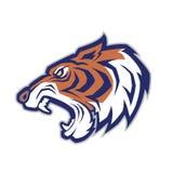 Tiger head mascot Royalty Free Stock Image