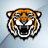 Tiger head mascot color. Color tiger head mascot on the metal background. Stylized  illustration Royalty Free Stock Image
