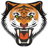 Tiger, tiger head with open mouth and teeth. Cartoon illustration of a tiger. vector illustration
