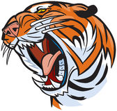 Tiger Head Roaring Vector Cartoon Illustration Stock Image