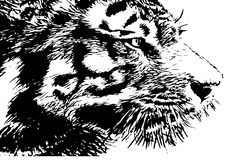Tiger head silhouette. Stock Photo