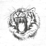 Tiger head silhouette - Vector illustration isolated on white background. Royalty Free Stock Photos