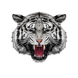 Tiger head sketch vector Royalty Free Stock Photography