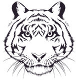 Tiger head. Sketch tiger head on a white background Royalty Free Stock Photography