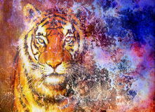 tiger head  in space with stars, computer collage. Royalty Free Stock Photography