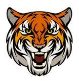 Tiger head Royalty Free Stock Photos