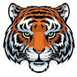 Tiger head. Vector of tiger head in detailed illustration Stock Images