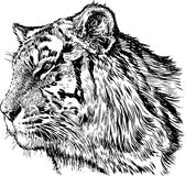 Tiger head. Vector drawing of a tigers head Stock Photos