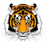 Tiger head. Vector illustration of Tiger head Royalty Free Stock Photography