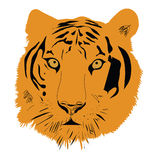 Tiger head vector illustration. On white background Royalty Free Stock Photo