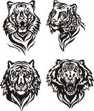 Tiger heads Royalty Free Stock Images