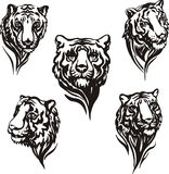 5 tiger heads Royalty Free Stock Photos