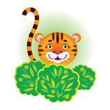 Tiger hiding in the bushes. Cartoon tiger cub hiding in the bushes Stock Photo