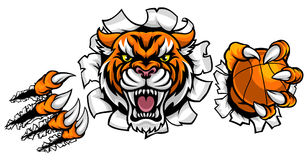 Tiger Holding Basketball Ball Breaking Background. A Tiger angry animal sports mascot holding a basketball ball and breaking through the background with its Stock Image