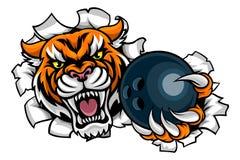 Tiger Holding Bowling Ball Breaking-Hintergrund Stockbild