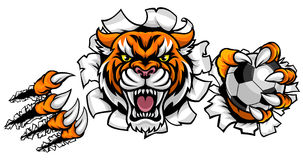 Tiger Holding Soccer Ball Breaking Background. A Tiger angry animal sports mascot holding a soccer football ball and breaking through the background with its vector illustration