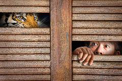 Tiger and human eye in wooden hole Stock Image