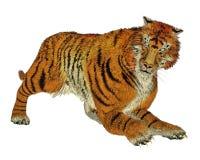 Tiger hunting Royalty Free Stock Photos