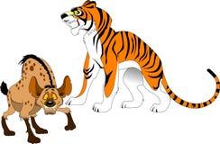 Tiger and hyena Stock Photos