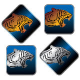 Tiger icon set Royalty Free Stock Photos