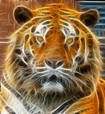 Tiger illustration Stock Photography