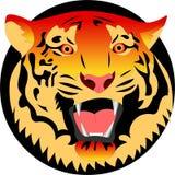 Tiger illustration Stock Image