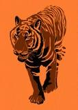 Tiger illustration Royalty Free Stock Photography