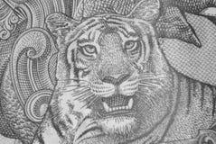 Tiger illustration on Indian Bank note Indian Rupee. Closeup of Tiger illustration on Indian Bank note Indian Rupee Royalty Free Stock Photography