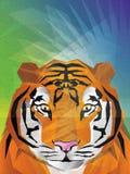 Tiger Illustration Stock Photo