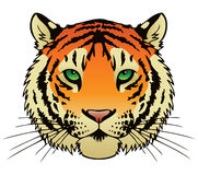 Tiger. An ink illustration of a tigers face Stock Photo