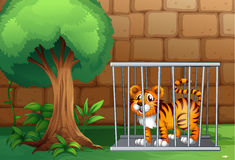 A tiger inside a steel cage Stock Image